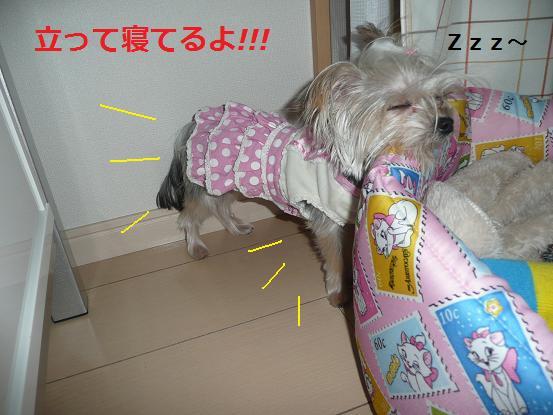 055_20091127192144.jpg