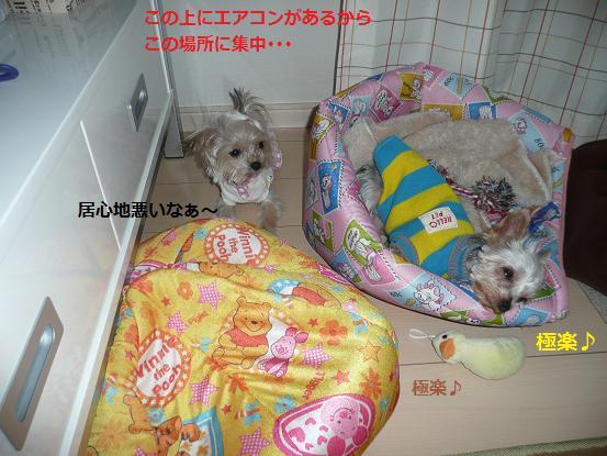 059_20091127190424.jpg