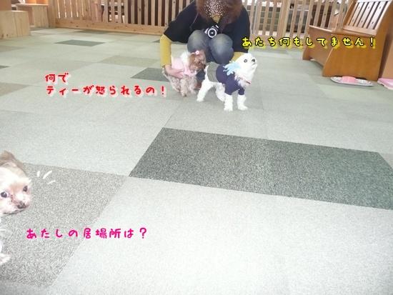 068_20100119171921.jpg