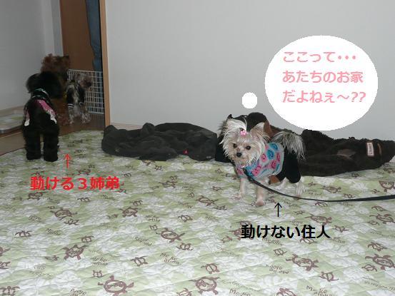 072_20091226082540.jpg