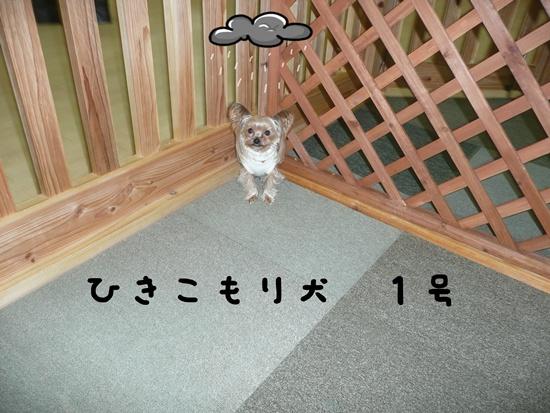 086_20100119174835.jpg