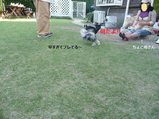 087_20091013214652.jpg