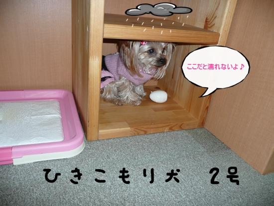 089_20100119174231.jpg