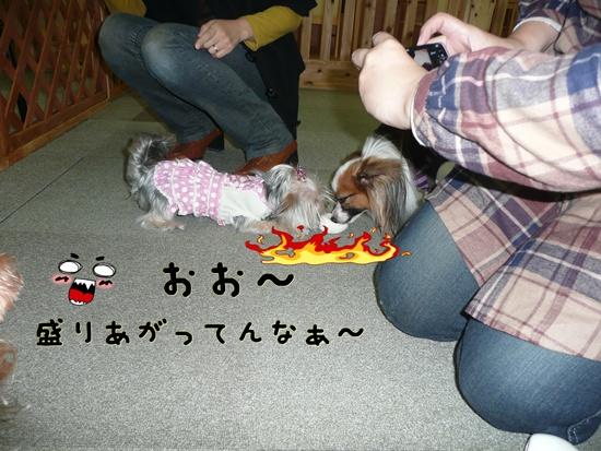 094_20100119175311.jpg
