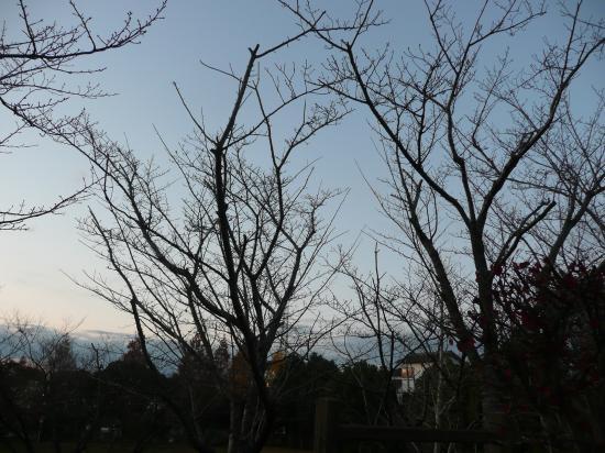 さみしい木
