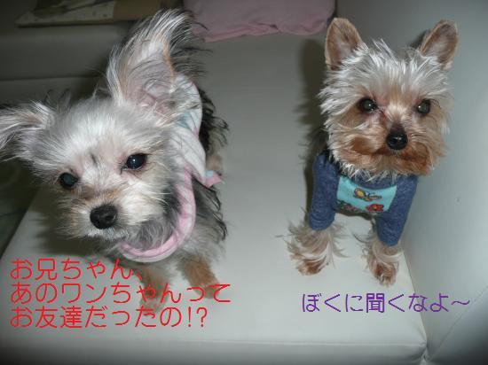 レイ&モコ