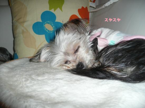 モコの寝顔
