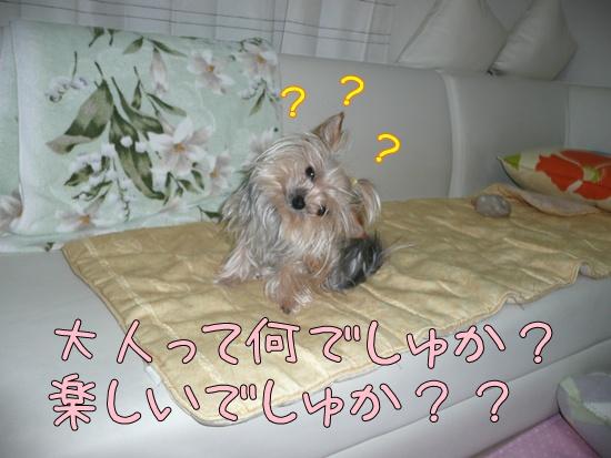 モコ4 (2)