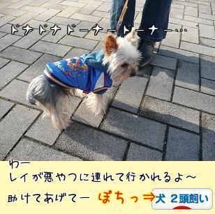 何故か悲しげなレイなのでしたー(今日のわんこ風)にほんブログ村 犬ブログ 犬 2頭飼いへ