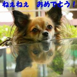 IMG_7497_20091105102546.jpg