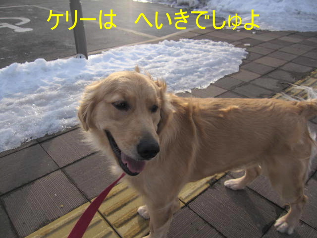 IMG_0492a.jpg