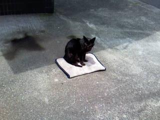 根性のすわった猫。