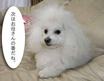IMG_0972.jpg