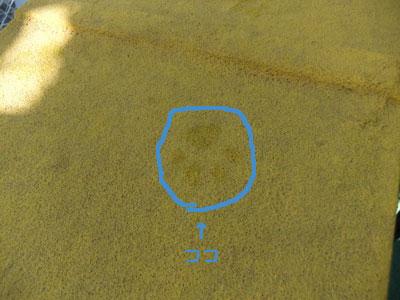11-1214-17.jpg