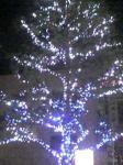 クリスマスツリー気取り