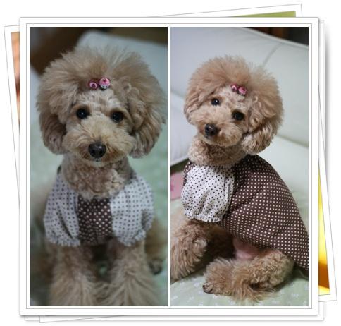 初めての犬服2