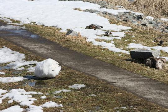 中津川の雪だるまの残骸