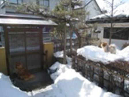 2010.2.14 ももちゃん家 060