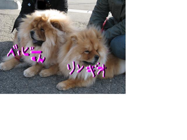 snap_ringio20070822_200945202428.jpg