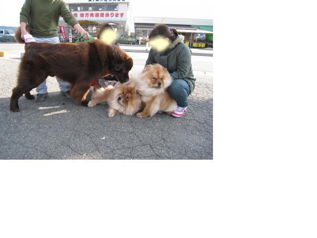 snap_ringio20070822_200945203132.jpg