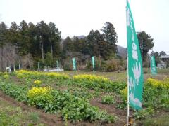 0413katakuri1.jpg