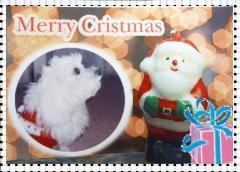2008クリスマス3344