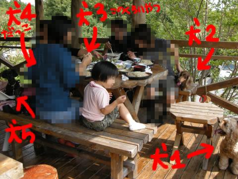 爽やかな高原の蕎麦屋に犬5匹+人間11人…(汗