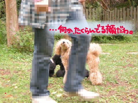 アヤシイ雰囲気を感じ取っている犬