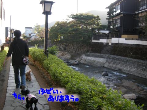 さやさやと流れる小川なんて、フツー街中にあります?