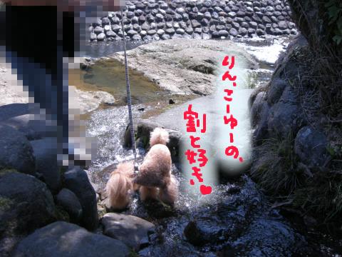 修善寺の街にはこんな小川が流れちゃってたりします☆