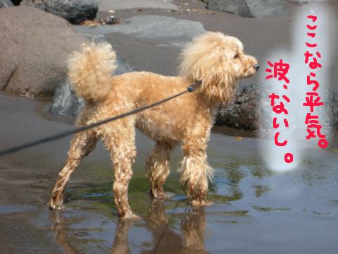 波がなければ、水大好きだもんね、りんは.