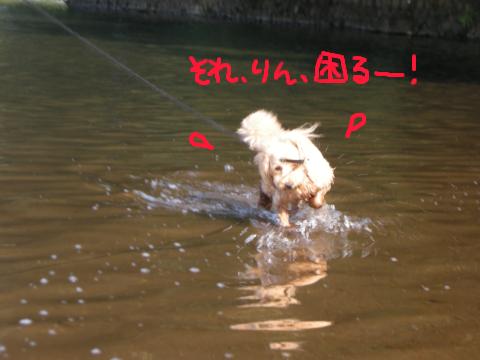 ちょ…そんな水しぶき上げて走らなくたって…(汗