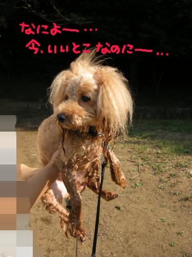 水揚げされた宇宙犬