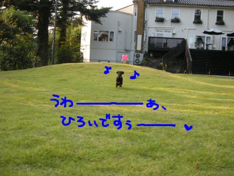 まっさきに飛び出しましたのは、ゼッケン1番、黒犬のあー!