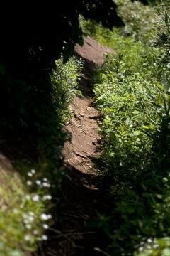ポン山への道