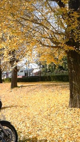 幸せの黄色い絨毯☆