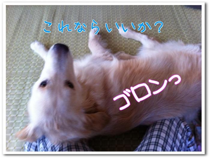 kbu_r.jpg