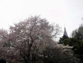 2009 hanami 12