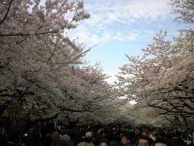 2009 hanami 4
