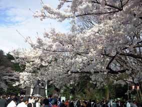 2009 hanami 5