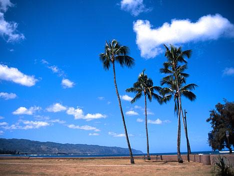 hawaii023s.jpg