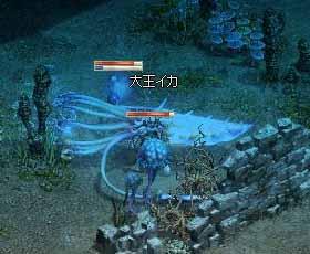 6/27大王イカ
