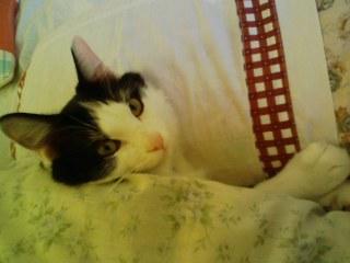 枕で寝るライト