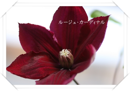 IMG_2094a.jpg