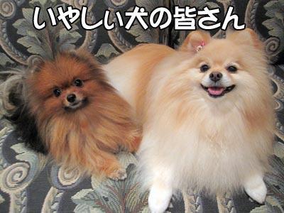 1111_卑しい犬