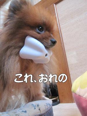 1117_おれの