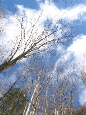 冬の達沢不動滝で見た空