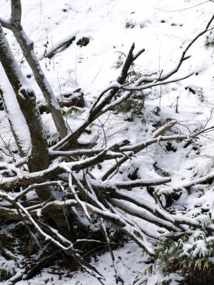冬の達沢不動滝の近辺