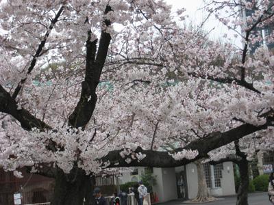 2009_0419_03.jpg