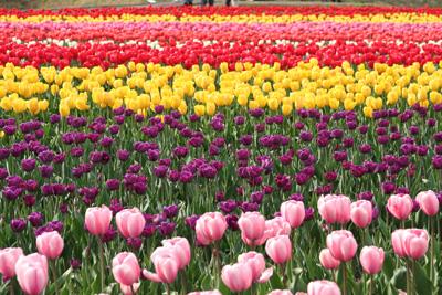 2009_0517_10.jpg